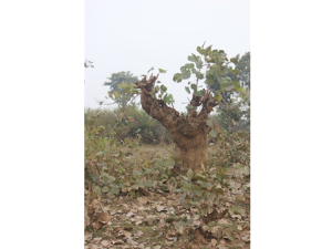 Nepal Unsustainable forest management