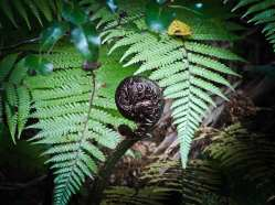 abaconda-new-zealand-fern